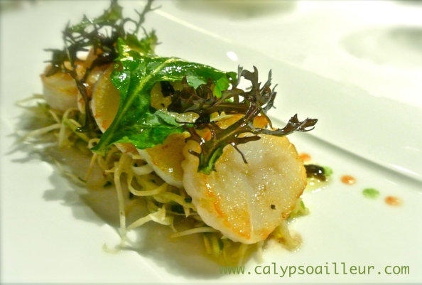 coquille-jacque